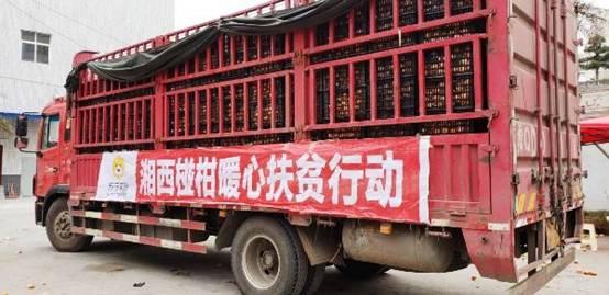 """苏宁拼购极致""""下沉"""" 助力湘西猕猴桃上行的甜美事业"""